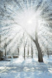 Winter Light Stock Images