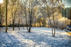 Winter light Royalty Free Stock Photo