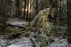 Winter Light. Winter in Snoqualmie National Forest, North Cascades, Washington State, USA Royalty Free Stock Photos