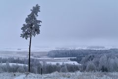 Winter in Lithuania  .View from above. Winter in Lithuania /  Misty ,cold day in Lithuania /  Rural landscape / view from above Stock Photography