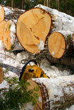 Winter logging. In New Brunswick, Canada Stock Photo