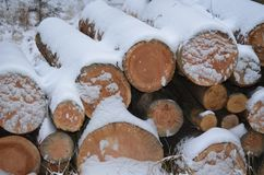 Winter logging in the forest Royalty Free Stock Images