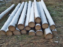 Winter logging in the forest Stock Photography