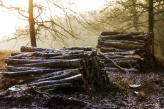 Winter logs Royalty Free Stock Photos