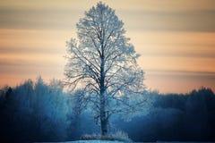 Winter lone tree. In  field Royalty Free Stock Image