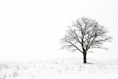 Winter loneliness Royalty Free Stock Photography