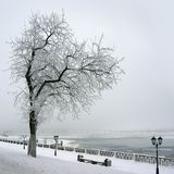 Winter, lonely tree on coast of river Stock Image