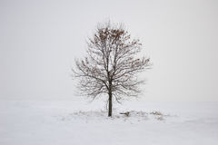 Winter lonely tree Royalty Free Stock Photo