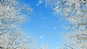 Winter Loop. Animation loop of frozen tree branches and snow stock video