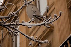 Winter Lvov Stock Photography