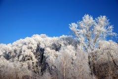 Winter-Märchen Lizenzfreies Stockfoto