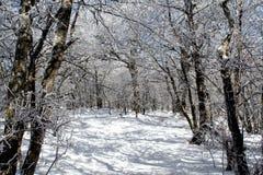 Winter-Märchenland Lizenzfreies Stockbild