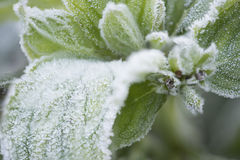 Winter macro Stock Photography