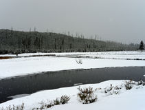 Winter Madison River Yellowstone Royalty Free Stock Photo
