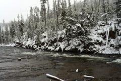 Winter Madison River Yellowstone Royalty Free Stock Image