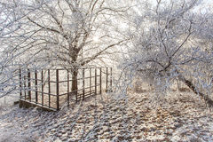 Winter magic park scene White frozen snowy landscape Nature cold Stock Photography