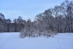Winter is a magical and fabulous time of year, the whole natural world froze in a deep sleep. Sleeps cold wood, hiding a white coat stock image