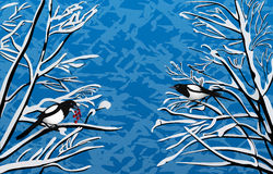 Winter magpie on the branches. Winter Magpie in a snowy forest blue background Royalty Free Stock Images