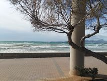 Winter in majorca. This is the cold day Stock Photography