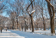 Winter on the Mall Stock Image