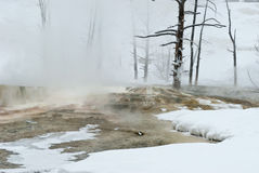 Winter, Mammoth Hot Springs, Yellowstone NP Royalty Free Stock Photo