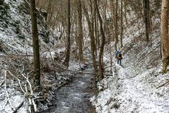 Winter Man hiking trekking in white forest. Travel recreation fitness and healthy lifestyle in beautiful snowy nature. Winter trek in white woods. Man hiking royalty free stock images