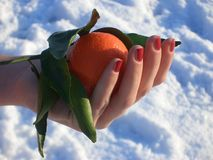 Winter mandarin. Hand holding a mandarin Royalty Free Stock Photo