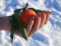 Winter mandarin Royalty Free Stock Photo