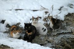 Winter map with cats 2. Landscape stories in the winter season on the Borcea arm Stock Photo