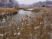 Winter Marsh Royalty Free Stock Photos