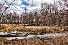 Winter at the Marsh. In the Minnesota Wetlands Royalty Free Stock Photo