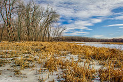 Winter at the Marsh. In the Minnesota Wetlands Stock Image