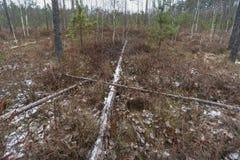 Winter marsh landscape stock photos