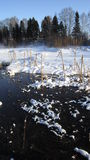 Winter marsh Stock Photo