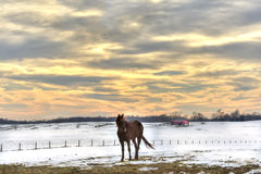 Winter on a Maryland Farm. Horse standing in a field of snow on a Maryland farm in Winter Royalty Free Stock Image