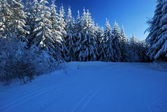 Winter meadow with forest around. Near Travny hill in Moravskoslezske Beskydy mountains Royalty Free Stock Photos