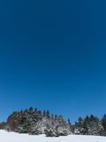 Winter meadow and forest. Sunny day in winter, beautiful blue sky and the coniferous forest Royalty Free Stock Image