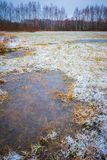 Winter meadow with frozen puddles Royalty Free Stock Photos