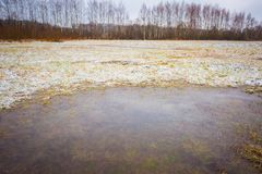 Winter meadow with frozen puddles Stock Photography
