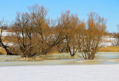 Winter meadow with frozen water and trees Stock Photography