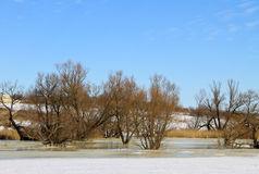 Winter meadow with frozen water and trees Stock Image