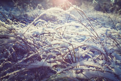 Winter meadow Stock Image