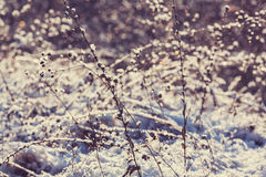 Winter meadow Royalty Free Stock Image