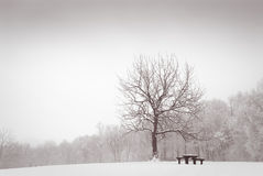 Winter meadow with lonely oak tree. Snow covered pristine meadow with tree and idyllic bench Royalty Free Stock Photography
