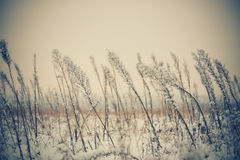 Winter meadow plants Royalty Free Stock Photography