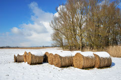 Winter meadow with straw bales. Winter meadow with straw packages are covered with light snow. In the background there are bare trees, the blue sky with clouds Royalty Free Stock Photos