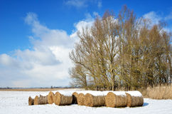 Winter meadow with straw bales. Winter meadow with straw packages are covered with light snow. In the background there are bare trees, the blue sky with clouds Royalty Free Stock Image