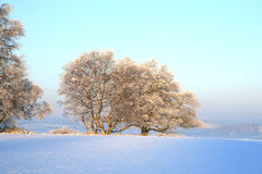 Winter meadow Stock Images