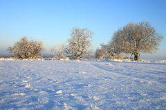 Winter meadow Royalty Free Stock Photos