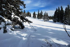 Winter meadow with tree near Roseggerhaus chalet in Styria. Winter snow covered meadow with trees and snowshoes steps near Roseggerhaus chalet in Fischbacher Stock Photo